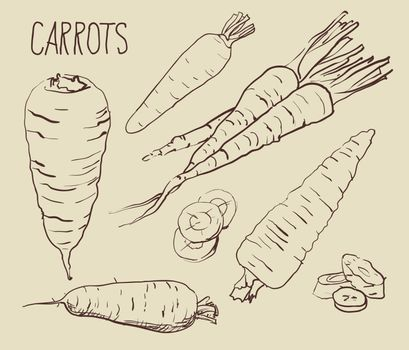 Set carrots isolated on white background.