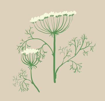 Set of symmetrical floral graphic design elements dill, Ukraine