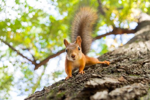 squirrel sits on a tree with a nut.