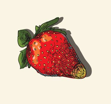 Vector illustration drawing of organic strawberries
