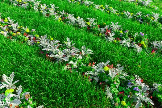 The photo shows a flower bed with flowers.