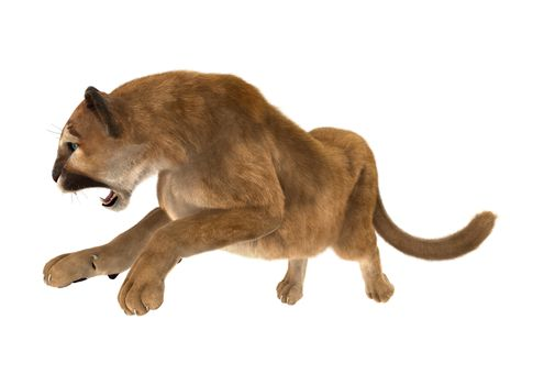 3D digital render of a big cat puma hunting iisolated on white background