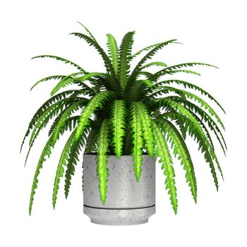3D digital render of a green boston fern in a flower pot isolated on white background