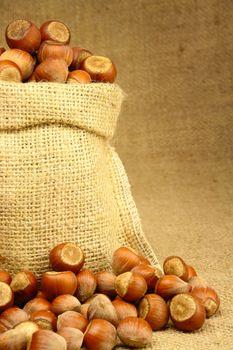 Hazelnut in Bag