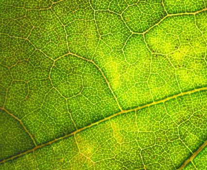 curl pattern on the leaves of a tree