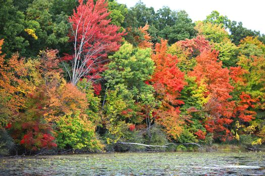 Colorful autumn trees by the lake