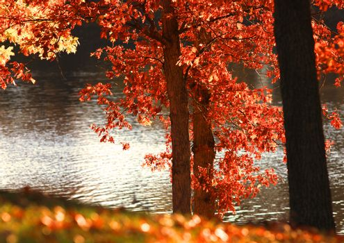 Autumn trees with sun reflections