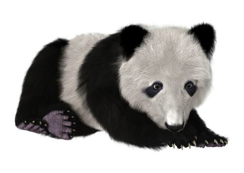 3D digital render of a panda bear cub resting isolated on white background
