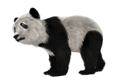 3D digital render of a panda bear cub isolated on white background