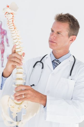Doctor holding an anatomical spine