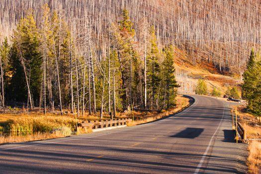 Drive through burnt trees