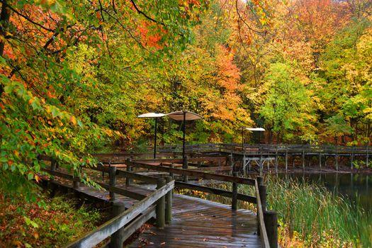 Board walk through colorful trees