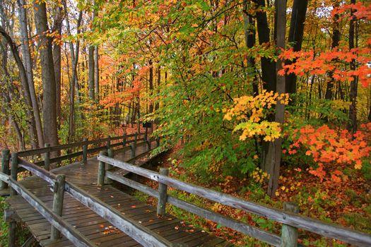 Autumn board walk