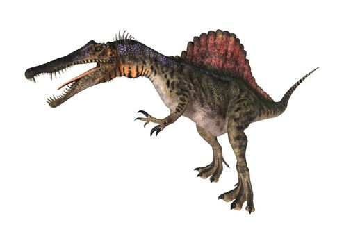 3D digital render of a dinosaur Spinosaurus isolated on white background