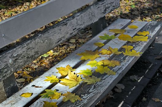 A wooden bench in South park, Sofia