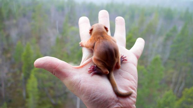 Little squirrel on palm over the taiga. It's snowing