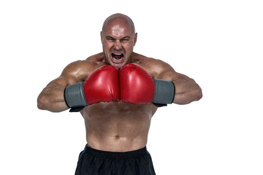 Aggressive boxer flexing muscles
