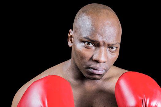 Portrait of bald boxer in gloves