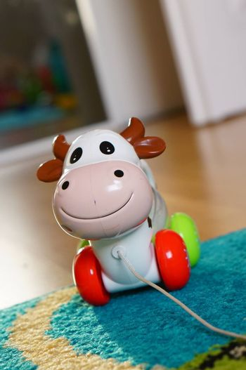 POZNAN, POLAND - AUGUST 20, 2015: Wheeled toy cow with pull rope on the floor
