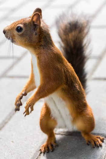The photo shows a squirrel