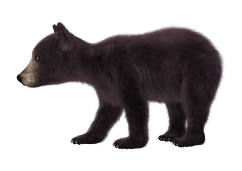 3D digital render of a black bear cub isolated on white background