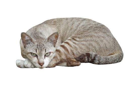 closeup of the pretty cat