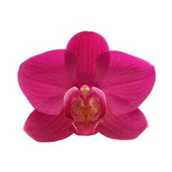 exotic color orchid flower