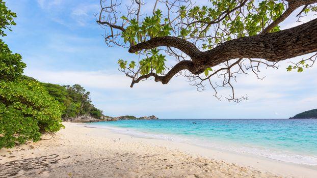 Sea and beach of Similan island in Thailand