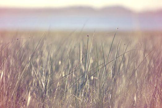 Grass field vintage hipster blur background