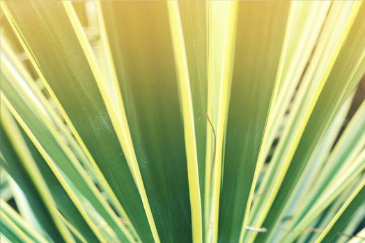 Closeup tropical plant leaf vintage background