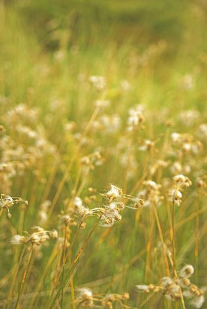 Grass wild flower countryside vintage background