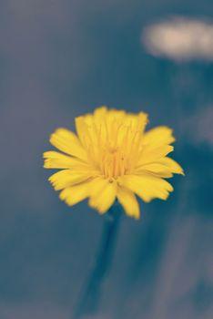Yellow flower vintage filter blur background