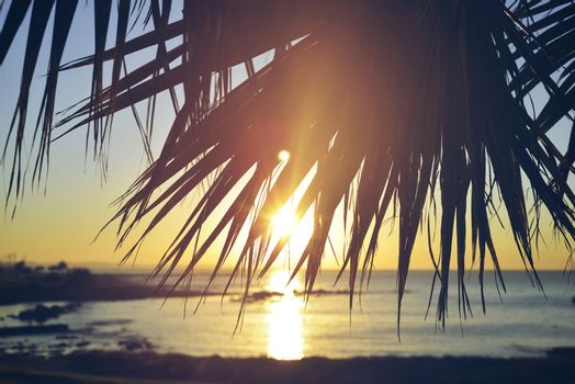 Summer beach sunset palm tree vintage background