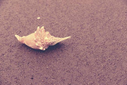Seashell summer time beach sand vintage background