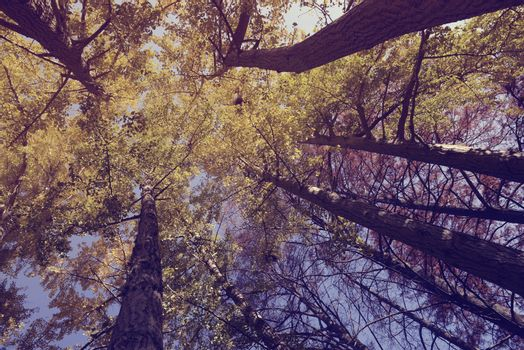 Trees view from below sky park vintage filter