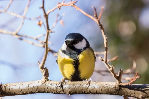 Tit sitting on a branch, waiting until it mounds of seeds.