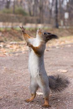 The photograph shows a squirrel Artist