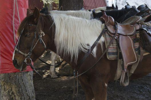 Horse riding club in Borovetz resort. Rila mountain, Bulgaria