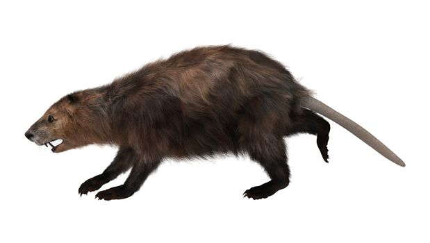 3D digital render of a beaver running isolated on white background
