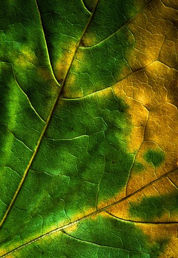 map of the autumn leaves