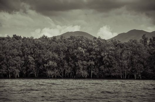 Mangrove forest in Thailand, Vintage style