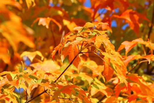 Beautiful colours of Autumn.