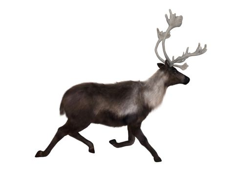 3D digital render of a caribou running isolated on white background