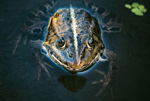 Frog head