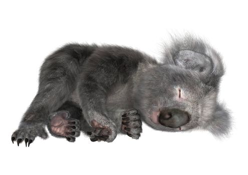 3D digital render of a cute koala sleeping isolated on white background
