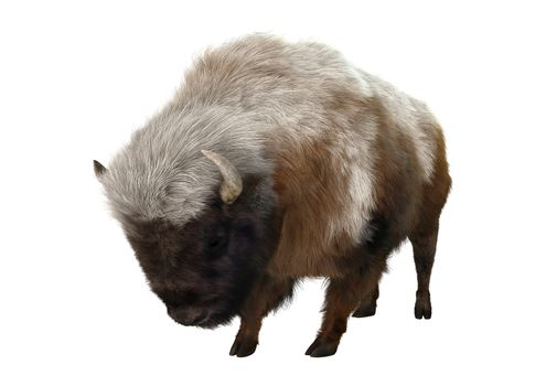 3D digital render of an Ameican bison isolated on white background