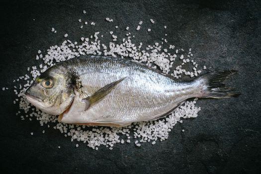 Gilthead fish on salt