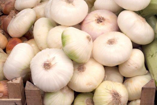 Big onios