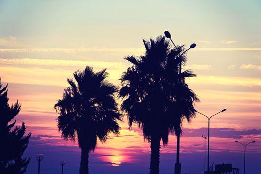 tree silhouette on paradise sunset