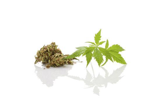 Cannabis foliage isolated on white background. Alternative medic